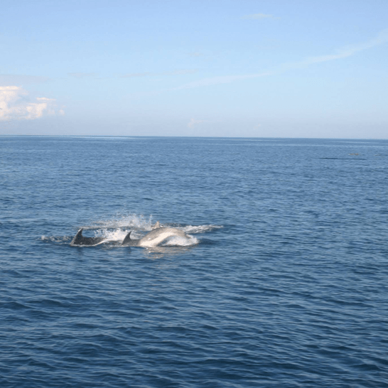 dolphins sligo